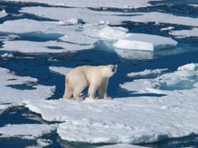 Is Al Jazeera America going to change the way networks cover climate change?