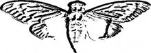 Is this a clue for code-breaking scavenger hunt Cicada 3301?
