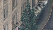 Seattle Man Refuses To Come Down From 80ft Tree