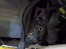Chula Vista couple break into van to save cat trapped in engine