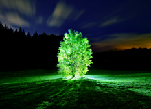 Glowing trees could lead to bright future for night golf