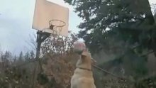 """Playtime: The Animals Shooting Baskets Megamix, Set To """"One Shining Moment"""""""
