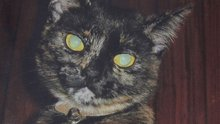 'Croydon Cat Ripper' May Be Keeping Trophies