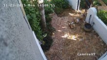 Cameras Catch UPS Driver Tossing Boxes Over Fence