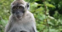 Plaintiffs in monkey farm suit won't back down
