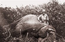 Big-game hunting has a long and storied history