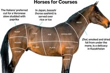 A Slaughterhouse for Horse Meat Waits in New Mexico
