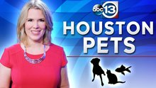 Houston Humane Society Pet Food Drive