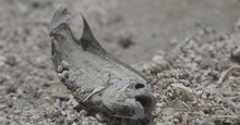 Salton Sea drying up threatens wildlife, people with death