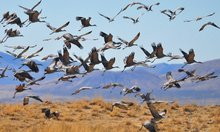 How Migratory Birds Could Save the Paris Agreement From the Supreme Court