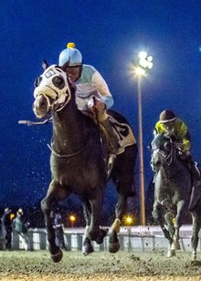 Tom and Gayle Benson's Mo Tom bound for Kentucky Derby