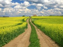 Which Canadian agricultural companies stand to reap big rewards from the TPP trade deal