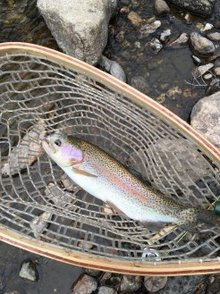 Fish kill in Big Thompson River may be linked to road construction project