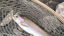 Fish kill in Big Thompson River might be linked to road construction project