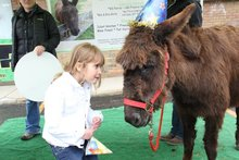 Delightful donkey that helps kids gets birthday bash