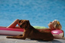 Pet danger zones to avoid this summer