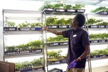 Oakland looks to bring pot industry out of shadows, raise revenue