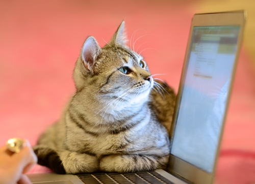 The 10 cats who are tired of getting bad pitches from PR pros