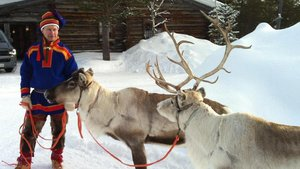 Just in time for Christmas: 6 things you (possibly) didn't know about reindeer
