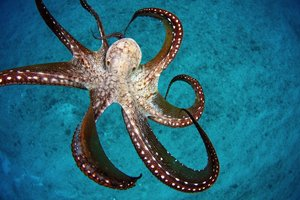 Well-Armed Design: 8 Octopus-Inspired Technologies