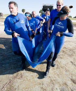 News   Study reveals unusual deaths of bottlenose dolphins in Florida